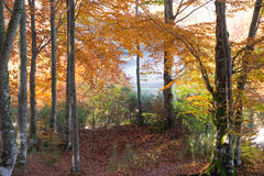Dream autumn forest Royalty Free Stock Photos