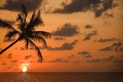 On the dream-beach. Sunrise with palm-tree on a dream-beach Royalty Free Stock Photo