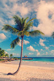 Dream beach with palm tree over the sand. Vintage. Tropical Paradise. Dominican Republic, Seychelles, Caribbean, Mauritius, Philippines, Bahamas. Relaxing on Stock Photo