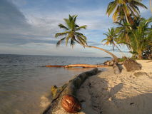 Dream beach in Panama. Beach at the Caribbean coast of Panama at the tiny island of Kuanidup Grande home of Kuna indians Stock Images