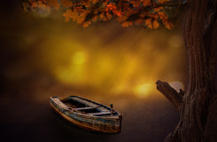 Dream Boat tree with bokeh background in woods Royalty Free Stock Photo