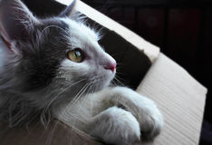 Dream cat. Sitting in his box a little kitten dreams of something great Royalty Free Stock Image