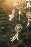 Dream catcher hanging from a tree in a field at sunset Royalty Free Stock Photography