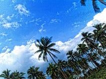 Dream Coconut grove stock photos