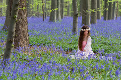 Dream fairy in bluebells woods Stock Photography