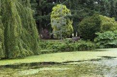 Dream garden Royalty Free Stock Photos