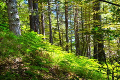 Dream green fairy tale forest with ferns Stock Photos