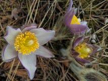 Beautiful lush flower Stock Photography
