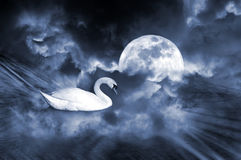 Dream Land. Dream sight of an white swan with full moon ambiance.Concept of dream love Royalty Free Stock Images