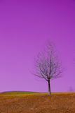 Dream land. One lonely old dry tree in grassland on a hill, background is pink sky. it's piece of land in people's dream Royalty Free Stock Photography