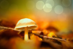 Dream mushroom autumn background Royalty Free Stock Photos