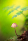 Dream mushroom autumn background Royalty Free Stock Photography