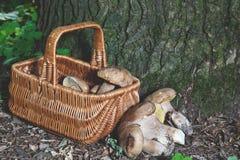 Dream of mushroom picker. Basket with porcini mushrooms. Stock Image