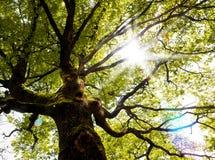 Dream scape,fantasy tree and sunbeam Stock Photos