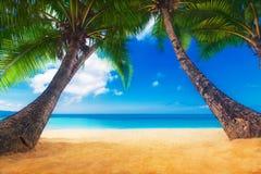 Dream Scene. Beautiful Palm Tree Over White Sand Beach. Summer N Stock Photo