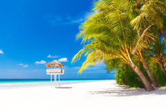 Dream scene. Beautiful palm tree over white sand beach. Summer n Royalty Free Stock Photography