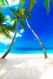 Dream scene. Beautiful palm tree over white sand beach. Summer n. Ature view Royalty Free Stock Images