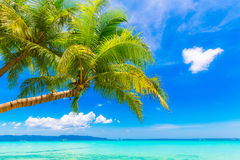 Dream scene. Beautiful palm tree over white sand beach. Summer n Stock Photography