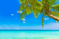 Dream scene. Beautiful palm tree over white sand beach. Summer n Stock Photo