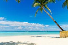 Dream scene. Beautiful palm tree over white sand beach. Summer n Royalty Free Stock Images