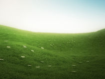 Dream scene lush green field Royalty Free Stock Images