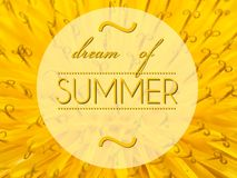 Dream of summer with flower macro background Stock Image