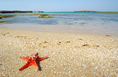 Dream about summer vacation. Red starfish laying on the sand on the empty beach Stock Photos