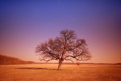 Dream tree. A lonely tree from a dream Royalty Free Stock Photos
