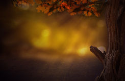 Dream tree with bokeh background in woods Royalty Free Stock Image