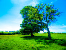 Dream trees Royalty Free Stock Photo