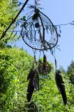 Dreamcatcher在森林里 库存图片