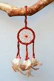 Dreamcatcher on a branch with a old wood background Stock Photography
