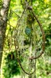 Dreamcatcher i skogen Arkivbilder