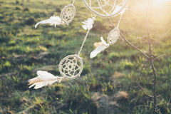 Dreamcatcher som hänger från ett träd i ett fält på solnedgången arkivfoton