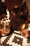 Dreamer kitten royalty free stock images