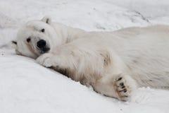 Dreamily bepaal De krachtige ijsbeer ligt in de sneeuw, close-up stock afbeelding