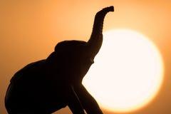 Dreaming Afrika royalty free stock photos