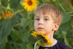Dreaming boy with sunflower Stock Images