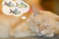 Dreaming cat Stock Image