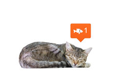 Dreaming Cat. Conceptual Image of a Cat Dreaming Fish Isolated on a White Background Stock Photo