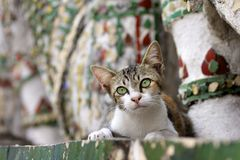 Dreaming cat at Wat Arun temple, Bangkok Royalty Free Stock Images