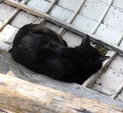 Dreaming of a catch. Sleeping cat in an old fishing boat royalty free stock photos