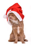 Dreaming Christmas Dog Wearing Santa Hat Royalty Free Stock Image