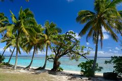 Dreaming Cook Islands. The gorgeous beach and sea of Rarotonga, Cook Islands, Pacific Ocean Royalty Free Stock Photography