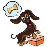 Dreaming dachshund Stock Image