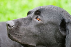Dreaming dog Stock Photography