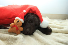 Dreaming of a dog's Christmas Royalty Free Stock Images