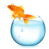Dreaming Goldfish In Aquarium. Vector Royalty Free Stock Image