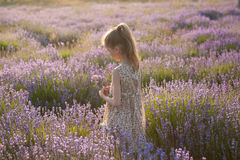 Dreaming handsome little girl with bouquet of lavender among blooming meadow stock image