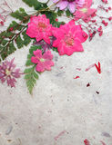 Dreaming in pink background royalty free stock images